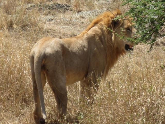 #safari #tanzania