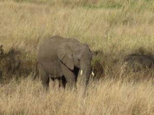 Сафари - Танзания2